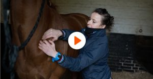Amandine krauskopf therapeute equin portrait